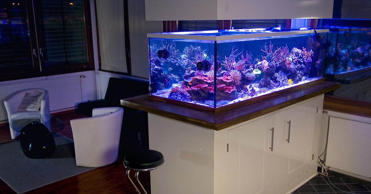 Realisation De Decoration D Aquarium
