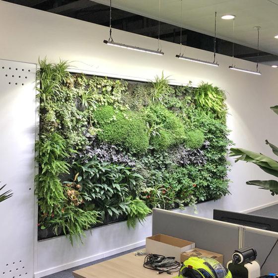 Mur végétal pour les bureaux de la société Infomaniak